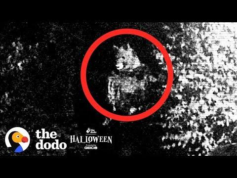 Couple Discovers Their Neighbor Is A Werewolf Or Is He?