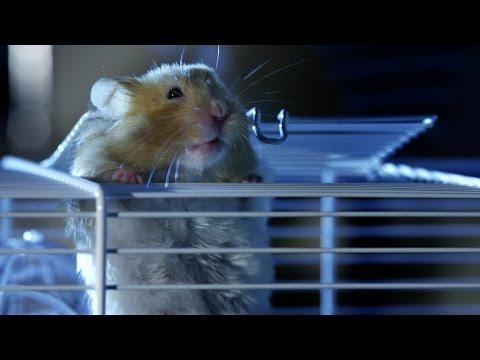 Hamster's Great Escape