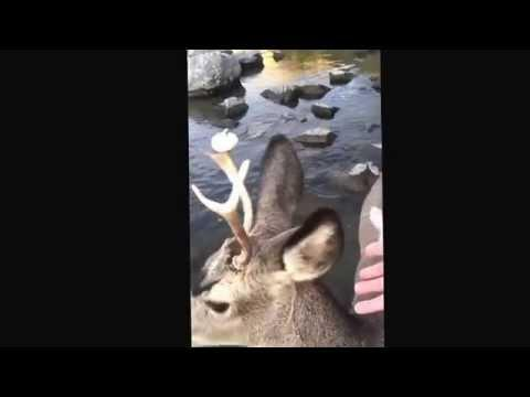 Wild Deer Delivers Donut To Dumbfounded Fisherman