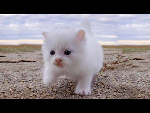 Purrfect Baby Cats to Make Your Day Bright Video