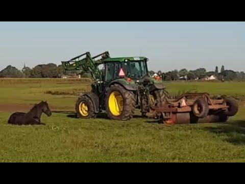 Sleeping next to the tractor and visiting the foals. Friesian horses.