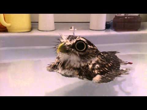 Floating Owl